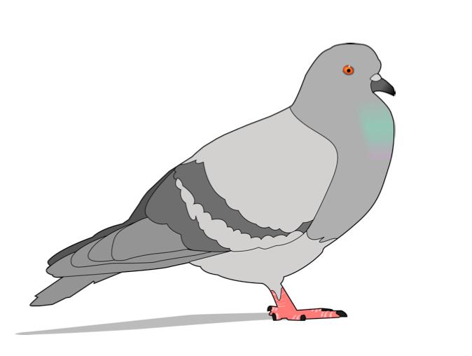 spettacolo-folle-piccione-foto.jpg